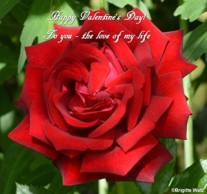 Happy Valentine love of life