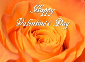 Happy Valentine orange rose